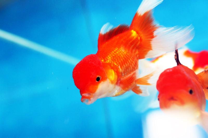 Poisson aquarium eau de mer froide images for Poisson eau chaude aquarium