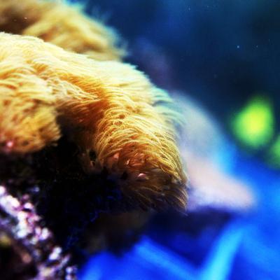 Arowana Aquarium Concept - Coraux - eau de mer