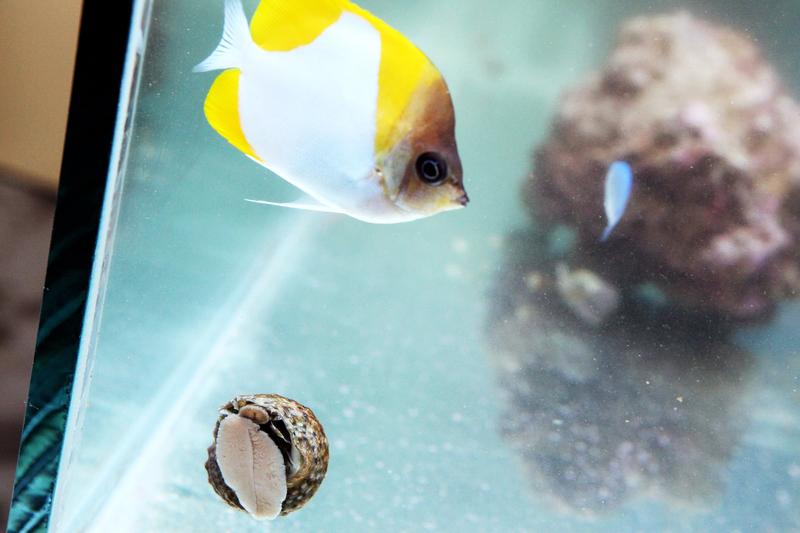 Vente poissons eau de mer pour aquarium mons arowana for Vente aquarium poisson