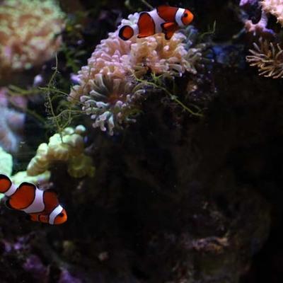 Arowan Aquarium Concept - présentation